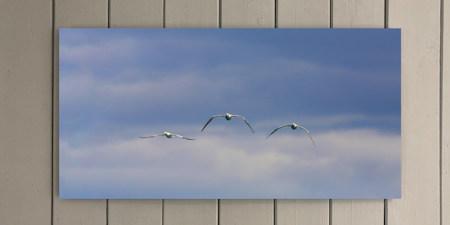 Three Gannets