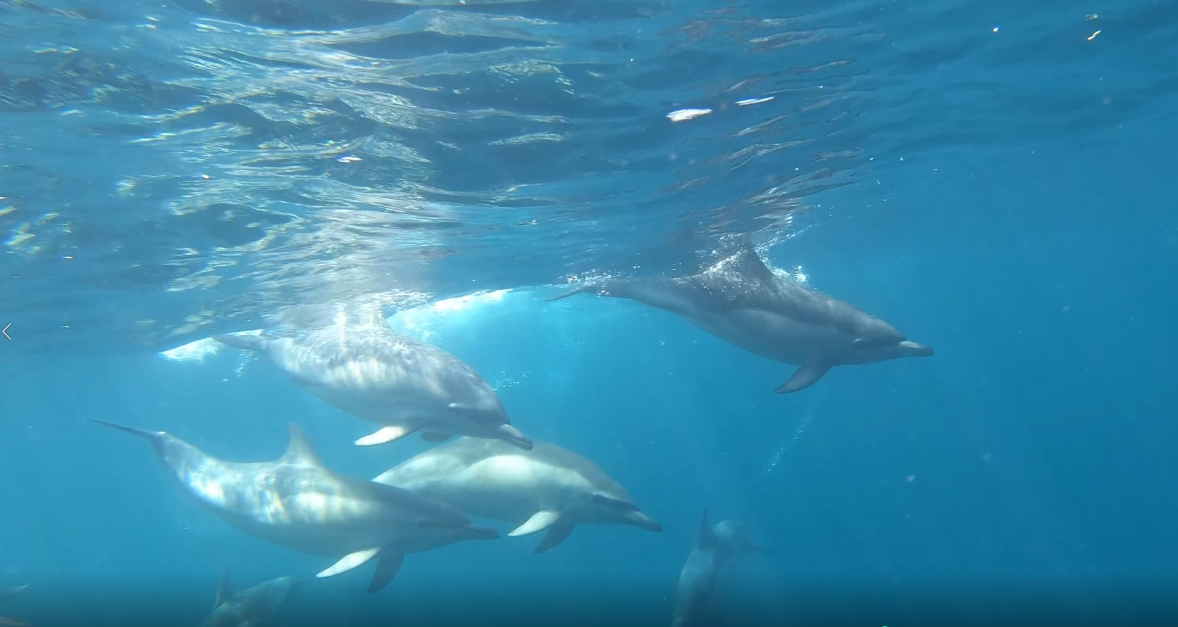 Dolphins - West Cork
